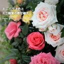 ミニバラ3色とミニ観葉の寄せ植え