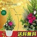 クリスマスの寄せ植え ( 玄関 ベランダ クリスマスプレゼント用 ) 【 送料無料 】