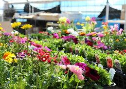 春夏の花苗24個セット