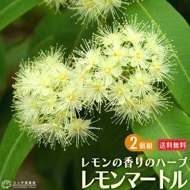 レモンの香りの『レモンマートル』 10.5cmポット苗 【 送料無料 】 【 2個セット 】