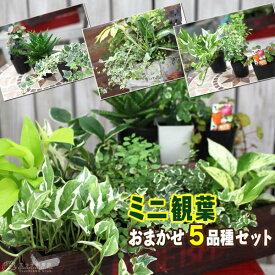 ミニ観葉 『 おまかせ 5品種セット 』 9cmポット 《 観葉植物 5個セット 》