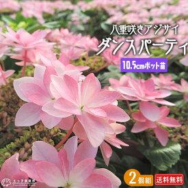 2個セット 八重咲きアジサイ ダンスパティ 苗 10.5cmポット苗 送料無料