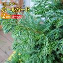コニファー『ボールバード』 15cmポット苗 【 2個セット 】 【 送料無料 】