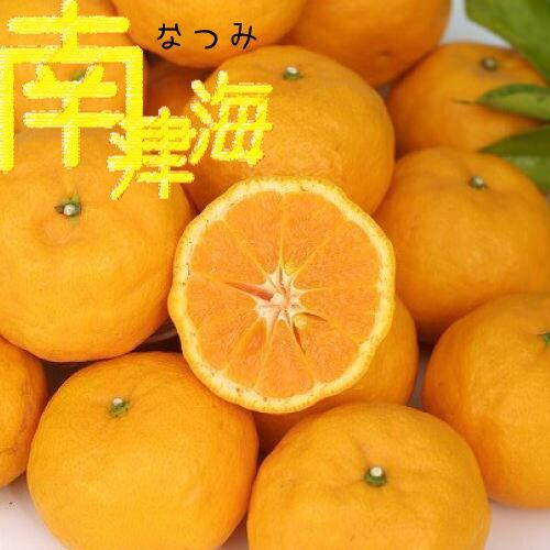 話題の新品種みかん 『 南津海 ( なつみ ) 』 13.5cmポット接木苗