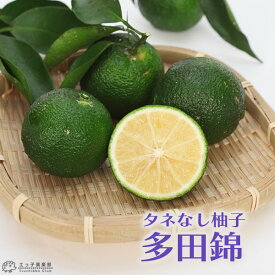 タネなし柚子 『 多田錦 』 タダニシキ 15cmポット接木苗