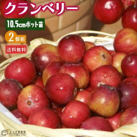 クランベリー ( ツルコケモモ ) 10.5cmポット苗 【 送料無料 】 【 2個セット 】
