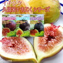イチジク 『 久留米いちじくシリーズ 』 12cmポット苗 【選べる品種】