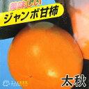 柿(甘)『太秋(タイシュウ)』12cmポット苗