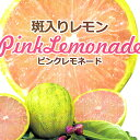 斑入りレモン 『 ピンクレモネード 』 ( 2年生 ) 13.5cmポット接木苗