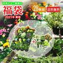 ( 福袋 2021年 ) 花苗と観葉植物のお得な福袋 「 花苗24個 & ミニ観葉4個 」 28個セット♪【 送料無料 】