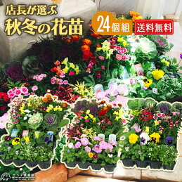 秋冬の花苗