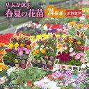 春夏の花苗 24個セット 【 送料無料 】