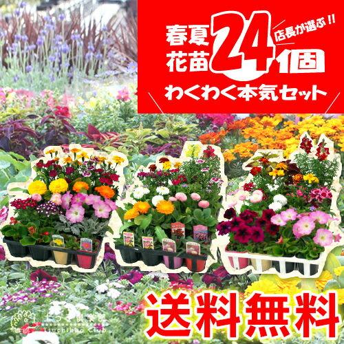 【 送料無料 】春夏の花苗 24個セット <今だけポイント10倍 5/24昼迄>
