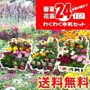 【 送料無料 】春夏の花苗 24個セット