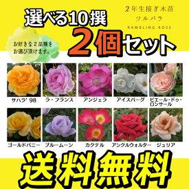 ツルバラ 2年生 接ぎ木苗 ( クライミングローズ ) 【 2個セット 】 【 送料無料 】 【 選べる品種 】