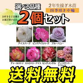 薔薇 苗 四季咲き中輪A 2年生 接ぎ木苗 【 2個セット 】 【 送料無料 】 【 選べる品種 】