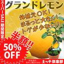 【楽天スーパーSALE 半額商品!】レモン『グランドレモン』 2年生 接ぎ木苗 6号鉢植え