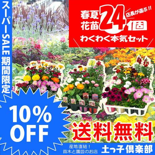 【楽天スーパーSALE 超特価!】【 送料無料 】春夏の花苗 24個セット