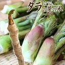 トゲなし 『 タラの芽の木 』 12cm(4号)ポット