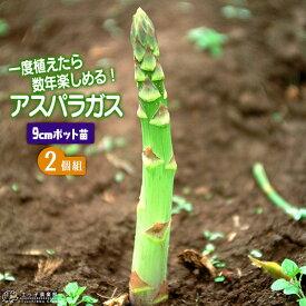 アスパラガス苗 9cmポット苗 【 2個セット 】