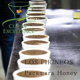 カップオブエクセレンススペシャルティコーヒー豆送料無料エルサルバドルパカマラ200gロス・ピリニョス農園ハニープロセス