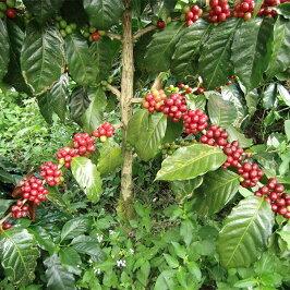 カフェインレスコーヒーデカフェ3種100杯カフェインレスコーヒー[コロンビア50杯・モカ25杯・バリ25杯]辻本珈琲のカフェインレスドリップコーヒー数量限定送料無料