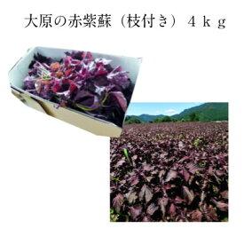 大原の赤紫蘇(枝付き)4kg梅干10kg用