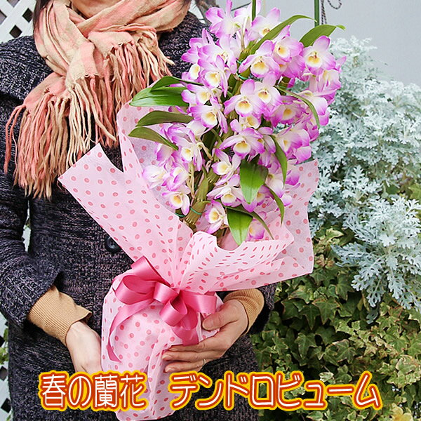 送料無料 赤字覚悟!人気の春色 デンドロビューム 蘭 デンドロビウム ラン鉢花