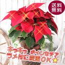 キラキラ☆光るポインセチアに変更できます! 送料無料【ポインセチア 5号鉢】鉢花 鉢植え 誕生日 クリスマス