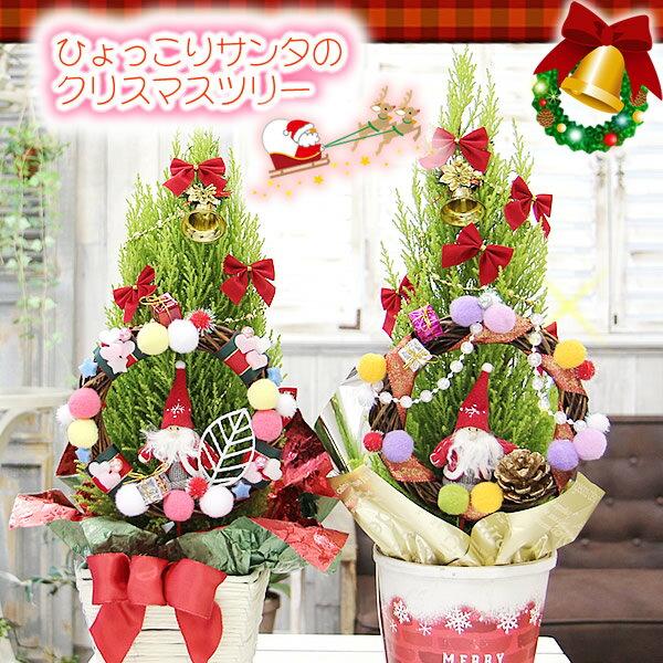 サンタさんがリースからひょっこり!♪サンタリース付のクリスマスツリー【ひょっこりサンタさんのクリスマスツリー鉢植え】鉢花 寄せカゴ クリスマス
