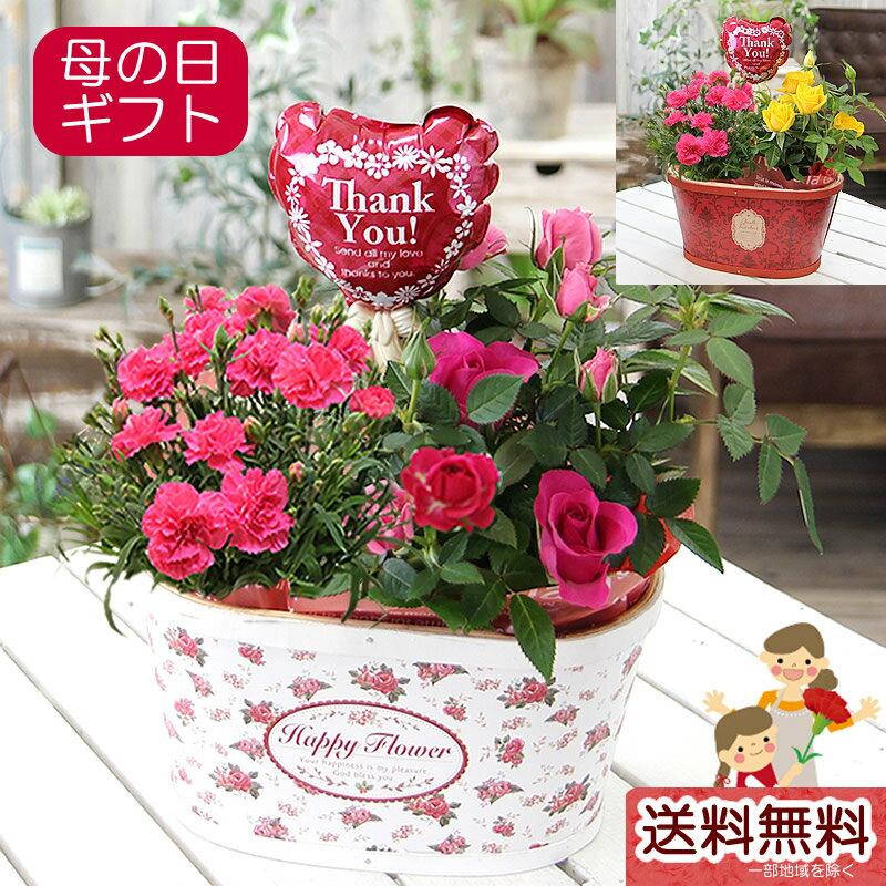 母の日 カーネーション 花 プレゼント ギフト 送料無料【カーネーションとミニバラ 鉢花寄せカゴ】鉢植え