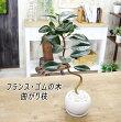 曲がり枝フランス・ゴムの木エコ・プラント観葉植物【BX100】
