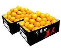 送料無料佐賀県産JAからつうまか美人約2.5kg×2箱2〜3Sサイズ