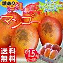 【今期最終】《送料無料》沖縄県産『訳ありマンゴー』約1.5kg(3〜6玉) frt ☆