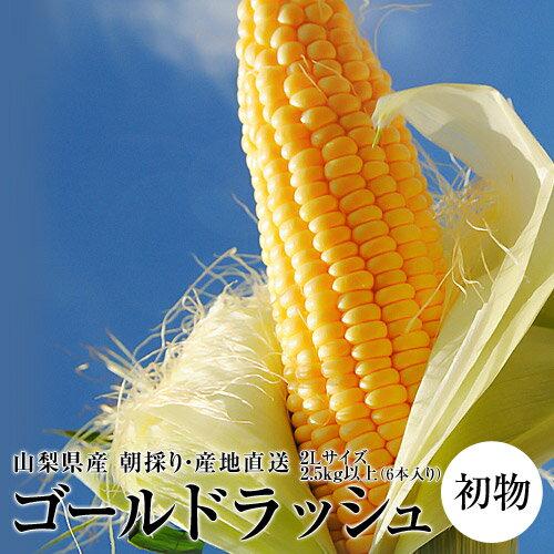 初物『ゴールドラッシュ』 山梨産 2Lサイズ 2.5kg以上(6本入り)※冷蔵 ☆