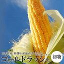 【初物!】『ゴールドラッシュ とうもろこし』 山梨産 2Lサイズ 2.5kg以上(6本入り)※冷蔵 ☆