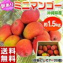 《送料無料》沖縄産 ミニマンゴー 約1.5kg 多少の訳あり品 frt ☆