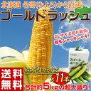 《送料無料》北海道名寄(なよろ)産 とうもろこし「ゴールドラッシュ」 約5kg 2Lサイズ 11本 ※冷蔵 ☆