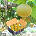 梨 なし 千葉県産 白井の梨 幸水 1箱 約2.5kg 7〜10玉 冷蔵 送料無料