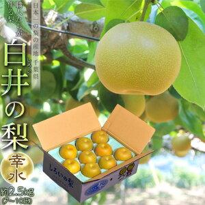 『白井の幸水梨』千葉県産 1箱 約2.5kg 7〜10玉 化粧箱 ※冷蔵