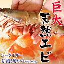 「天然・有頭シータイガー」5尾 約500g  ※冷凍 sea ☆