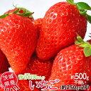 《送料無料》茨城県産 菅谷利男さんのいちご お試し不揃い 1箱約500g(約250g×2P) ※冷蔵 frt ○