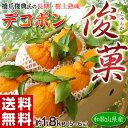 《送料無料》和歌山県産 長期樹上熟成デコポン「俊菓」5〜6玉 約1.8kg 産地直送 frt ☆