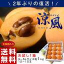 びわ フルーツ fruits 長崎県産 びわ「涼風」3〜5L 約1kg 化粧箱 ※冷蔵・送料無料 ☆