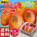 《送料無料》訳有り『沖縄産マンゴー』 大ボリュームの約1.5kg(3〜6玉) frt ☆ ランキングお取り寄せ