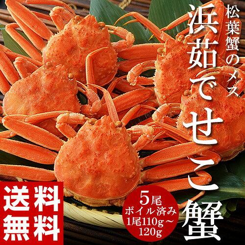 ≪送料無料≫香住産ボイル『松葉せこ蟹』5尾(1尾110g〜120g)※冷凍sea☆