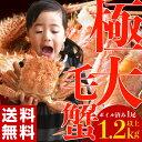 ≪送料無料≫北海道産 極大 ボイル毛蟹 1尾×1.2kg以上 sea ☆