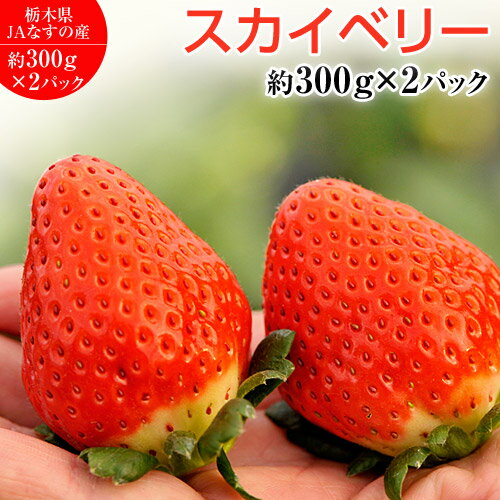 いちご 栃木県産 「スカイベリー」 1箱 約600g <約300g(5〜15粒)×2パック> ※冷蔵