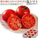 トマト 熊本・八代産 塩トマト 8〜16玉 約700g