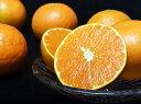 柑橘 長崎県産 あすみ M〜3Lサイズ 約2.5kg 送料無料